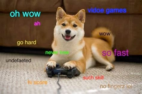 Wow Dog Meme - dog memes wow image memes at relatably com