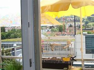 Himbeeren Auf Dem Balkon : wellensittiche auf dem balkon wellensittich portal ~ Eleganceandgraceweddings.com Haus und Dekorationen