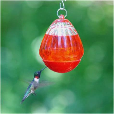 bee resistant hummingbird feeder bird feeders at hayneedle