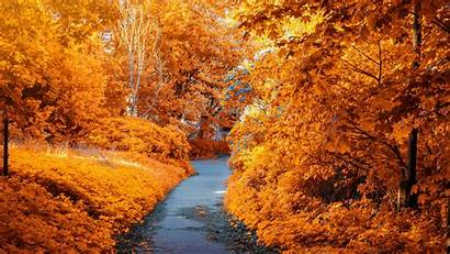 Leaves Path Autumn Foliage Wallpapers Wallpapermaiden Uhd