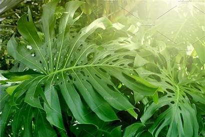Tropical Plants Forest Nature