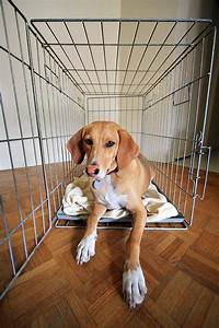 top 5 reasons your dog wont crate train With dog crates for dogs