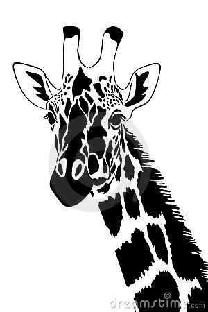 giraffe  black  white stock photo image