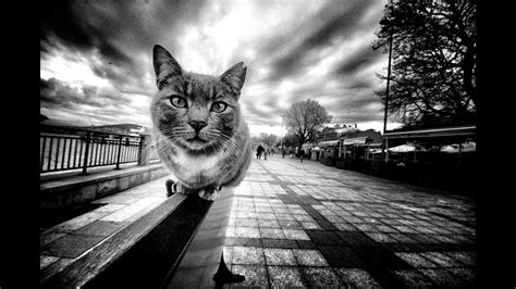 street photography top selection july  youtube