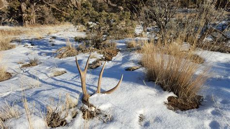 emergency shed hunting closures in utah gohunt