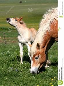 Paarden weiland
