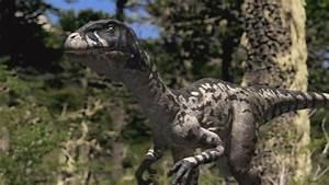 Dromaeosaurus Pictures & Facts - The Dinosaur Database