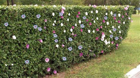 canapé prix 10 haies de jardin pour vous séparer de votre voisin