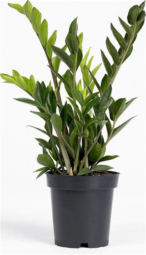 plantes verts d interieur plantes vertes c 244 t 233 jardin