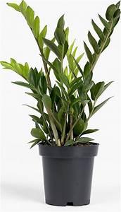 Plante Verte D Appartement : plante verte d appartement ~ Premium-room.com Idées de Décoration
