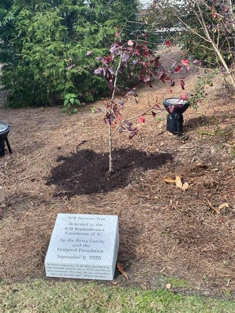 9/11 'Survivor Tree' planted during ceremony at ...