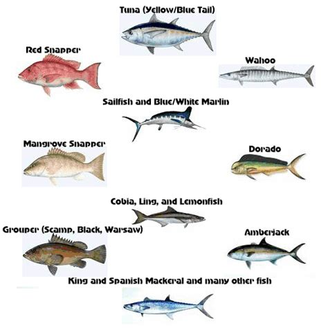 louisiana fish gulf fishing saltwater salt water mexico coast chart surf sport species texas offshore trips venice sea guide deep