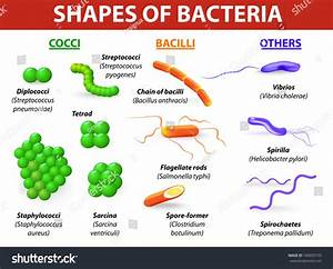 Common Bacteria Infecting Human Vector Illustration Stock ...