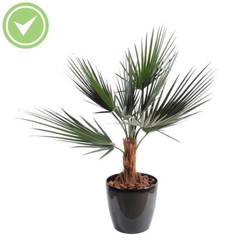 palmier exterieur pas cher palmier artificiel ext 233 rieur pas cher maison et fleurs