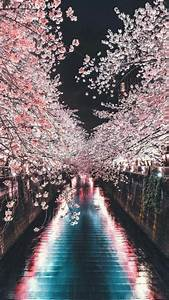 cherry blossom wallpaper | Tumblr