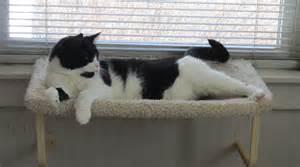 cat window hammock millie saturday caturday
