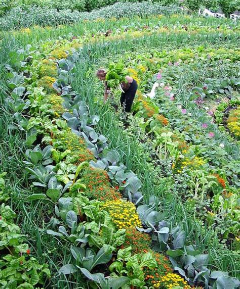 creative vegetable garden ideas epic gardening