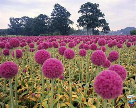 sfondi fioriti sfondi prati fioriti 42 sfondi in alta definizione hd