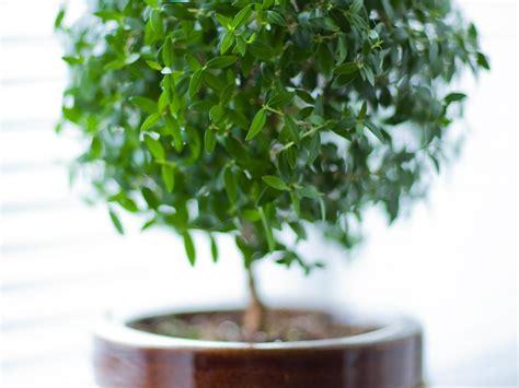plante chambre mettre une plante dans sa chambre bonne ou mauvaise idée