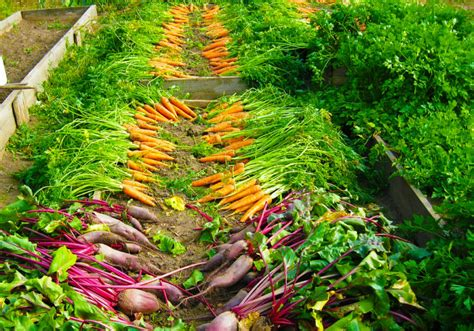 How To Start An Organic Vegetable Garden In Your Backyard by 6 Ways To Increase Food Production In Your Organic
