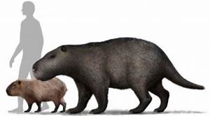 Size of the prehistoric rodent compared to man and the ...