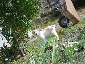 Hund Im Garten Vergraben : k sespezialit ten hausnudeln u v m vom vilgerhof in strassen ~ Lizthompson.info Haus und Dekorationen