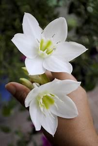 White Flower Photos Names