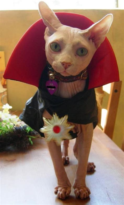 I'm Going To Really Miss My Count Catula This Halloween