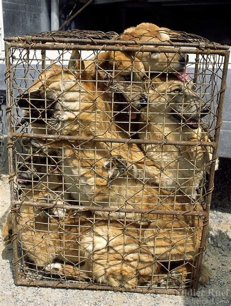 dog meatnet   factory farms  bad