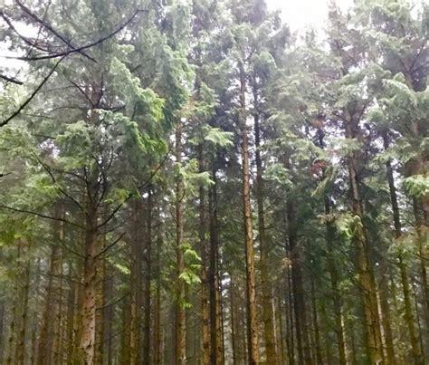 Foret Image Boreal Coniferous Forest Vegetation Zone