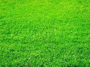 Bright green grass great as a background | Stock Photo ...