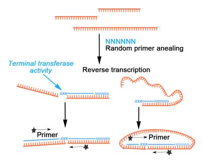 Template switching causes artificial junction formation ...