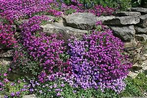 Pflanzen Für Trockenmauer : 24 stauden f r steingarten trockenmauer pflanzsteine ebay ~ Orissabook.com Haus und Dekorationen