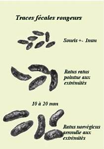 Crottes De Souris : d ratisation bruxelles airsoft services votre partenaire ~ Melissatoandfro.com Idées de Décoration