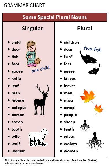 Plural & Singular Nouns  All Things Grammar