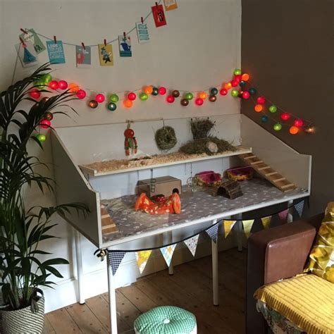 amazing guinea pig homes  reading residence