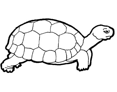 turtle templates crafts colouring pages