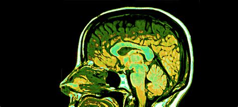 Brain Science And Cognitive Psychology Explores Our Mental