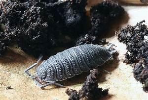 Insecte Qui Mange Le Bois : insectes rampants ou autres ~ Farleysfitness.com Idées de Décoration