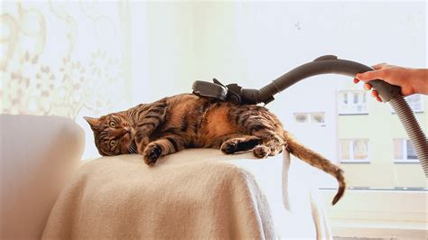 Bobo The Cat At The Vacuum Cleaner Spa Life With Cats