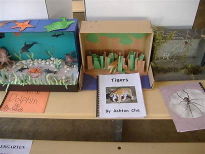 Diorama Animal Projects Report