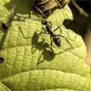 Mittel Gegen Rote Ameisen : schnecken bek mpfen was wirklich hilft sch dlinge garten ~ Whattoseeinmadrid.com Haus und Dekorationen
