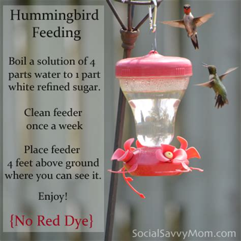hummingbird food recipes contact support