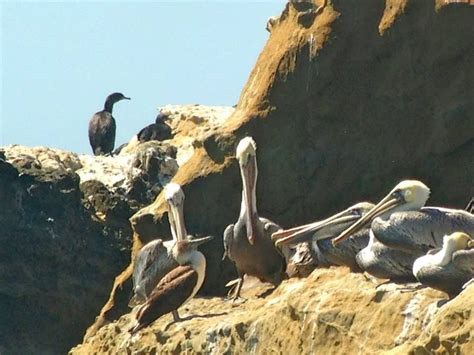 Birders Flock To See Blue-footed Boobies