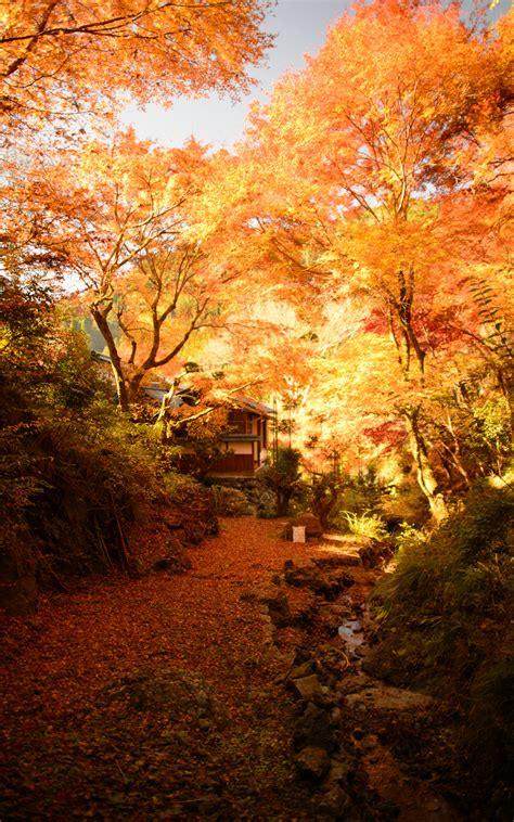 jeffrey friedls blog   pretty pictures  kyotos