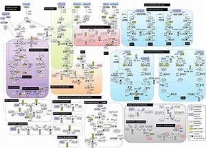 Glucose Metabolism Diagram Metabolic Pathway Reminds