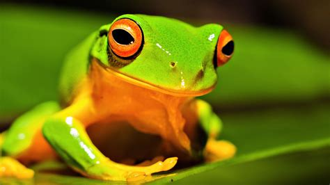 Nature And Animals Wallpapers - nature animals frog green wallpaper wallpaper wiki