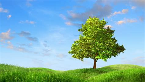 Tree Animation Wallpaper - tree growing on a green hill with the sun and clouds