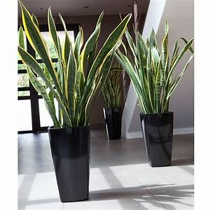 Grand Pot De Fleur Interieur : vasi esterno design vasi da giardino scegliere tra i ~ Premium-room.com Idées de Décoration
