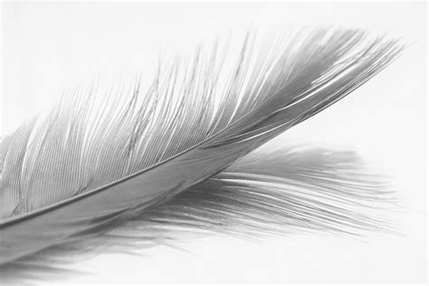 Feather And Its Reflection In Black And White Photograph